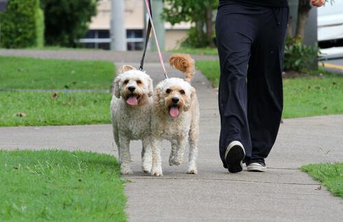 cachorros de paseo
