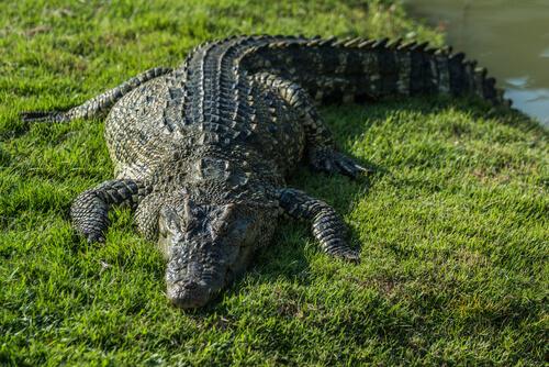 Los 8 animales más longevos del mundo