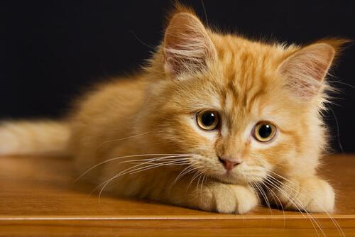 7 cosas que los gatos odian