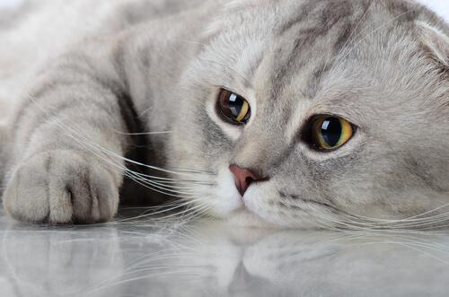 Mentiras y verdades sobre nuestros amados gatos