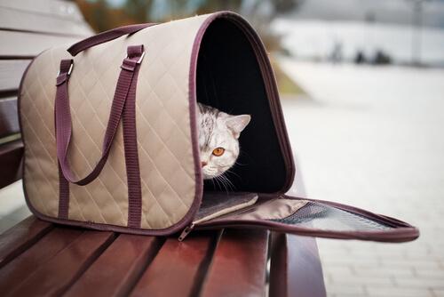 gato en bolsa