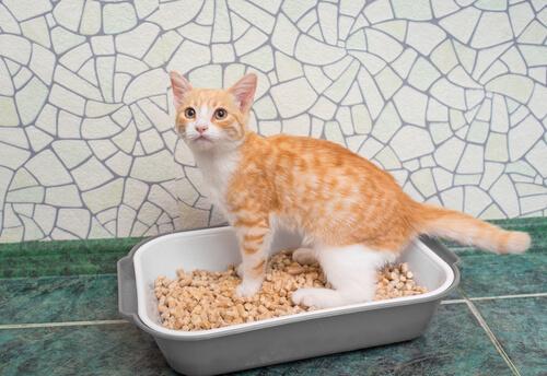 Gato em caixa de areia