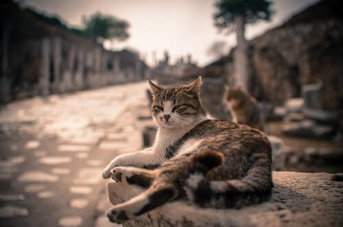 ¿De dónde provienen los gatos? ¿Desde cuándo nos acompañan?