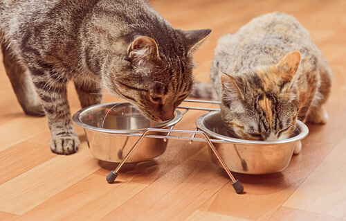 5 legumbres permitidas para los gatos