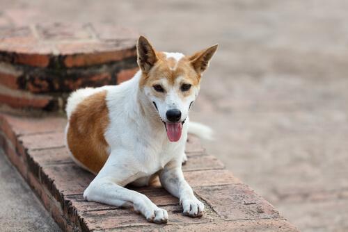 Todos sobre la leishmaniasis canina