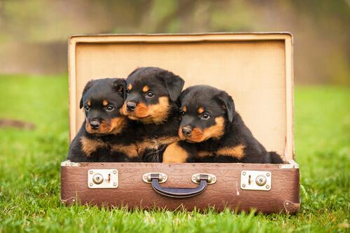 maleta cama perro 2