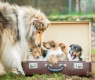 maleta cama perro