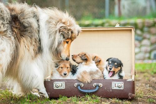 Viejas maletas que puedes reciclar como cama para tu perro