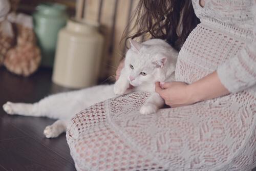 Mulher grávida com gato
