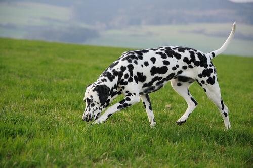 Ejercicios de olfato para tu perro… ¡Trabaja su máximo potencial!
