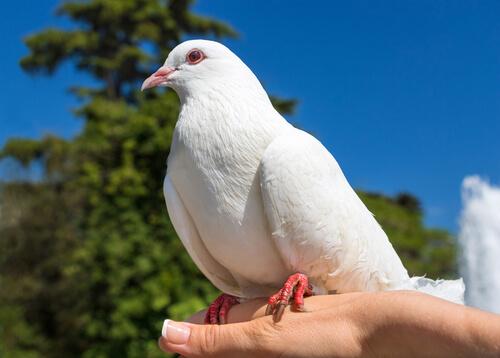 Una paloma sobre una mano