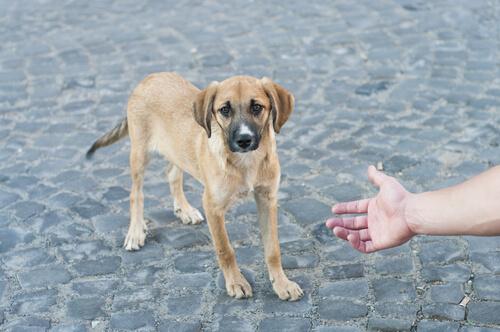 Qué hacer si has encontrado un perro en la calle