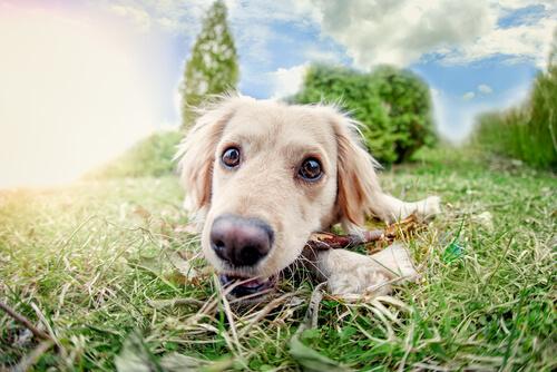 ¿Conoces los 5 y el sexto sentido de tu perro?