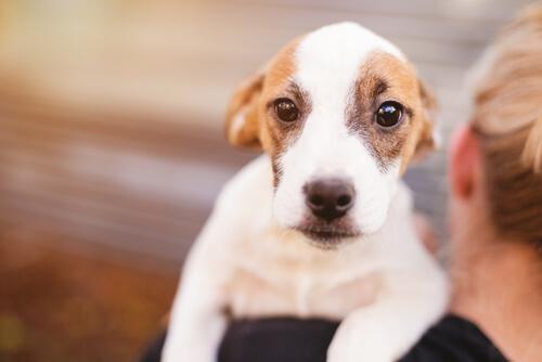 dicas para aliviar a tosse nos cachorros
