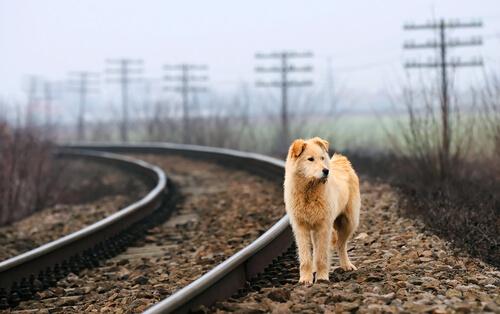 perro vagabundo