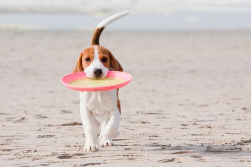 Perro y frisbee