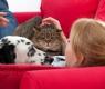 perro y gato sofa