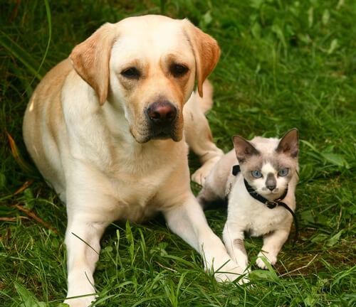 Cómo prevenir la alergia a nuestra mascota