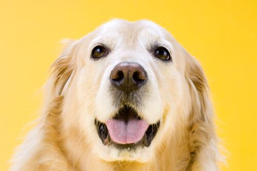La intuición en los perros