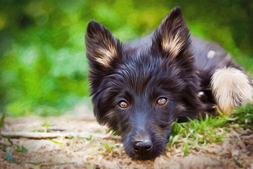 ¿Cuáles son las ventajas de los perros mestizos?