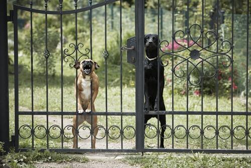 ¿Existen perros agresivos o hay dueños peligrosos?