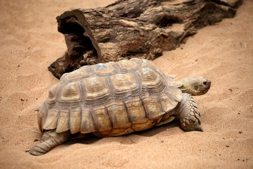 Cómo cuidar una tortuga de tierra