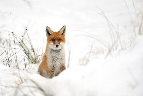 5 animales que viven en la nieve