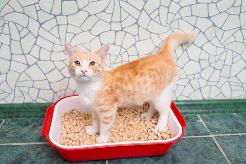 Arena para gatos: escoge la más adecuada