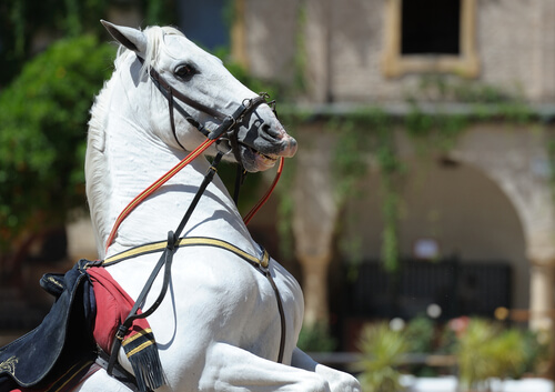 caballo andaluz 2