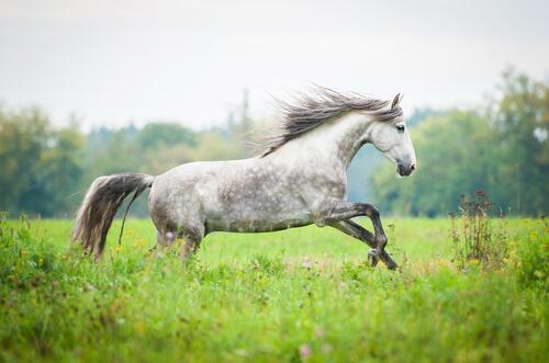 caballo andaluz 3