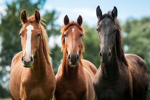 Conocemos al caballo