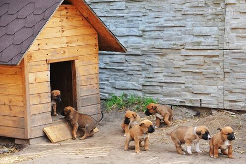 La tos de las perreras: una enfermedad muy común y fácil de tratar