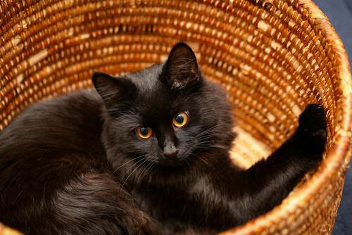 Camas para gatos hechas a mano