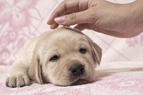 Fazendo carinho em um cachorro pequeno