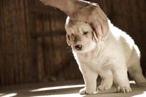 caricia perro 2
