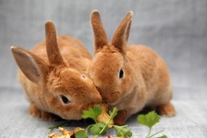 Conejos comiendo