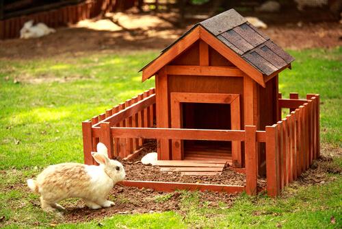 Consejos a la hora de tener un conejo en casa