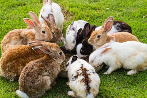 ¿Puede un conejo comer zanahoria?