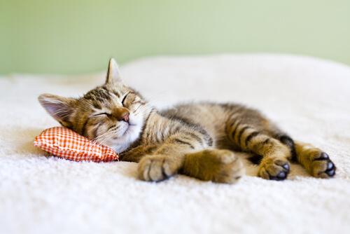 Si tu gato es un poco vago, puede tener esos problemas…