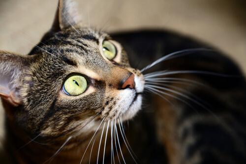 ¿Cómo ven el mundo los gatos?