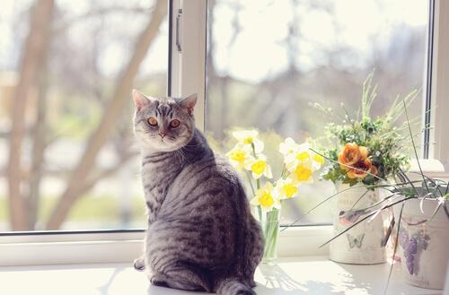 ¿Qué es el marcaje felino?
