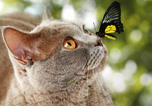 Descubre si tu gato es inteligente o no