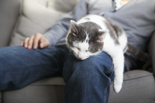 A cat asleep on its owner's leg.