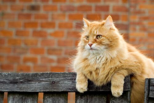 ¿Cómo marcan su territorio los gatos?