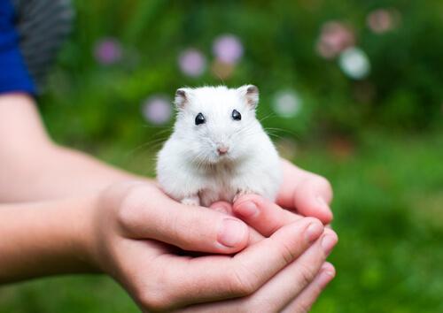 Las mascotas más adecuadas para los pequeños de la casa