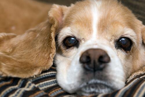 ¿Qué significa que mi perro tenga la nariz seca?