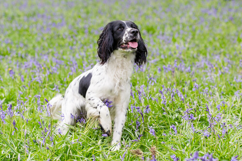 La aromaterapia en perros, ¿qué es?
