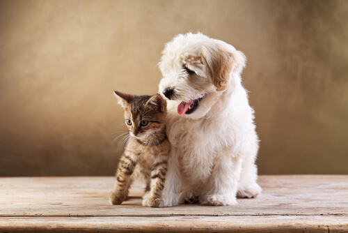 Trucos para ahorrar con tu mascota