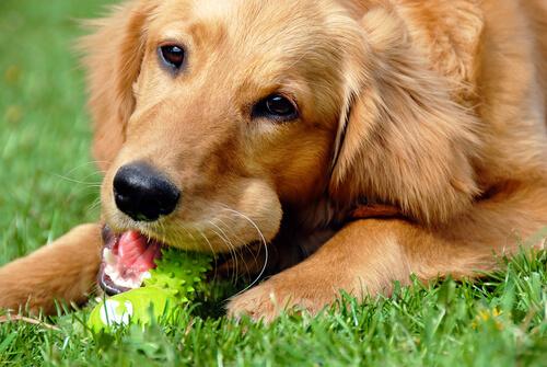 perro y juguete