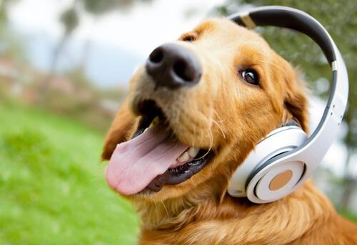 Cachorro com fone de ouvido